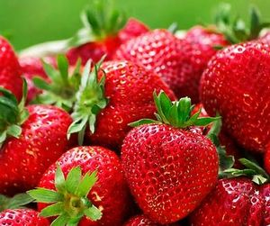 BR Strawberry Quinault Fragaria x ananassa (Quinault Strawberry)